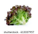 red oak lettuce | Shutterstock . vector #613337957