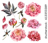 Stock photo watercolor collection of pink peonies buds petals and foliage isolated on white botanical 613353389
