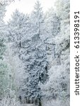 the trees in the winter forest...   Shutterstock . vector #613398191