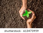 seedlings are growing in the... | Shutterstock . vector #613473959
