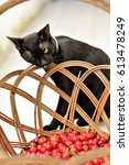 Small photo of The basket of acerola and the black cat