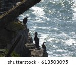 cormorants on the rocks | Shutterstock . vector #613503095