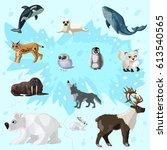 cartoon arctic fauna set with... | Shutterstock .eps vector #613540565