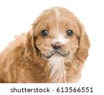 cute dog   Shutterstock . vector #613566551