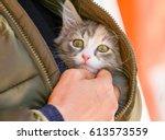 Stock photo cute cat 613573559
