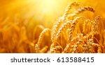 wheat field. ears of golden... | Shutterstock . vector #613588415