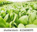 Vegetables Hydroponics System...