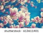 spring magnolia flowers ... | Shutterstock . vector #613611401