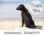 dog at sandy beach  text thank... | Shutterstock . vector #613699175