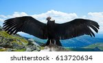 Small photo of Andean condor (Vultur gryphus) in wildness area