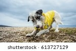adorable playful parson russell ...   Shutterstock . vector #613727129