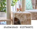 Small photo of Cute funny cat and tree in room