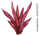 watercolor red sea weed. grass... | Shutterstock . vector #613774175