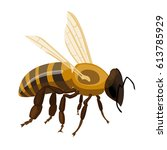 flying realistic honey bee... | Shutterstock .eps vector #613785929