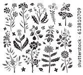 flowers  herbs  leaves. herbal  ... | Shutterstock .eps vector #613810709