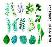 set of green watercolor leaves... | Shutterstock . vector #613826225