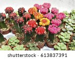cactus  succulents in potted | Shutterstock . vector #613837391