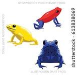 frog poison dart frog set... | Shutterstock .eps vector #613838069