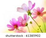 beautiful flowers border.floral ... | Shutterstock . vector #61385902