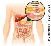 cartoon digestive human organs... | Shutterstock .eps vector #613960715