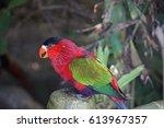 parrot in tenerife | Shutterstock . vector #613967357