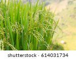 a selective focus picture of...   Shutterstock . vector #614031734