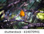 Cute Bird On Branch. Forest...