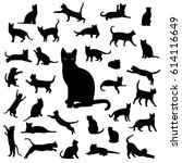 Black Cat Collection