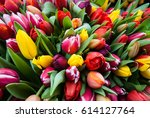 Colorful Spring Tulips In Huge...