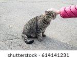 Female Hand Closeup Petting...