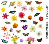 Stock photo large set of butterflies and flowers isolated on white background 61420639