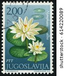 Small photo of RUSSIA KALININGRAD, 12 NOVEMBER 2016: stamp printed by Yugoslavia, shows water lilia, circa 1971