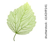 leaf isolated.vector... | Shutterstock .eps vector #614249141
