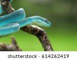 viper snake | Shutterstock . vector #614262419