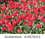 red tulips | Shutterstock . vector #614276111