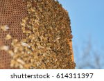 honey bees on honeycomb against ... | Shutterstock . vector #614311397