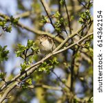 chiffchaff in tree | Shutterstock . vector #614362154