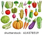 fresh vegetables sketches.... | Shutterstock .eps vector #614378519