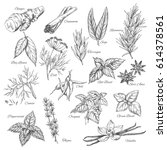 herbs sketch of ginger and... | Shutterstock .eps vector #614378561