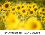 sunflower | Shutterstock . vector #614380295