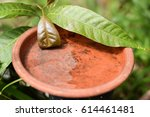 stagnant water in an old... | Shutterstock . vector #614461481