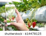 smart agriculture  farm  ... | Shutterstock . vector #614478125