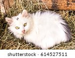 Cat Lying In Basket With Hay