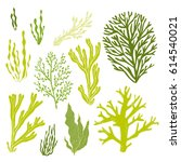 Trendy Summer Seaweed Design....