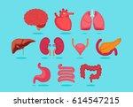 organ vector illustration | Shutterstock .eps vector #614547215