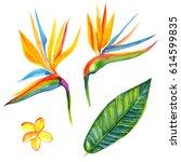 Strelitzia Watercolor Flower Set