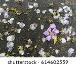Petals On The Concrete Floor...
