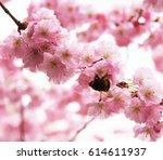 blossom cherry tree | Shutterstock . vector #614611937