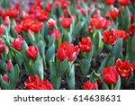 red tulips flower | Shutterstock . vector #614638631