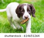 springer spaniel puppy | Shutterstock . vector #614651264